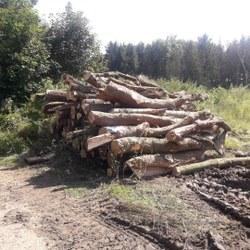 Soumissions – Vente de bois suite à un abattage à Dalhem