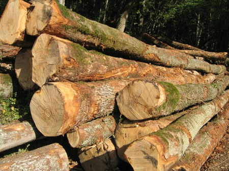 Mise à disposition gratuite de bois
